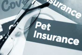 How Do I Choose the Best Pet Insurance?