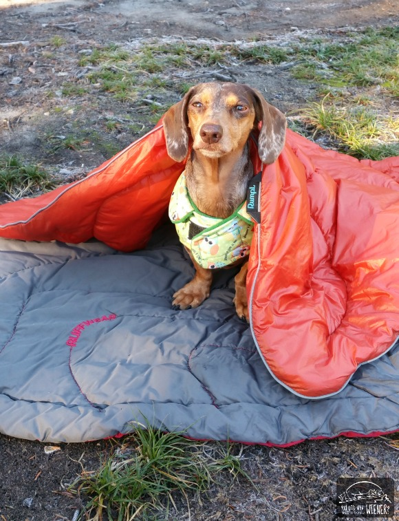 Camping with Dogs - Gretel's Camp Nest