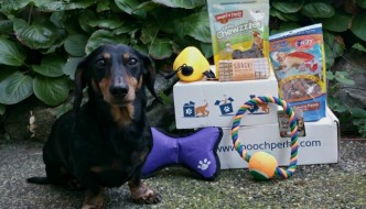 October Pooch Perks Dog Subscription Box