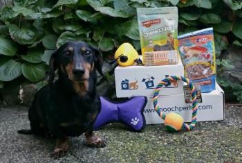 October Pooch Perks Dog Subscription Box