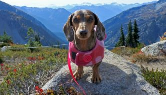 Dog Friendly Fall Hike: Heather-Maple Pass Loop
