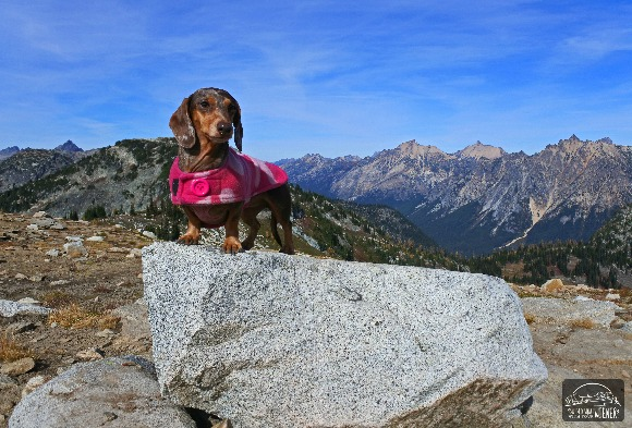 Worried whether your dog living with IVDD can hike again? Learn how we have adjusted Gretal's activity in lieu of her diagnosis.