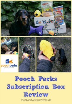 October Review of the Pooch Perks Dog Subscription Box