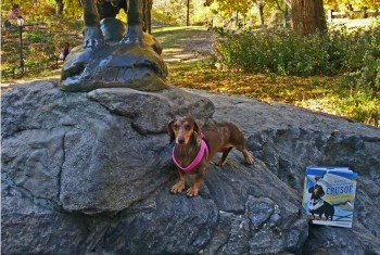 Introducing Crusoe the Celebrity Dachshund's Adventure Book