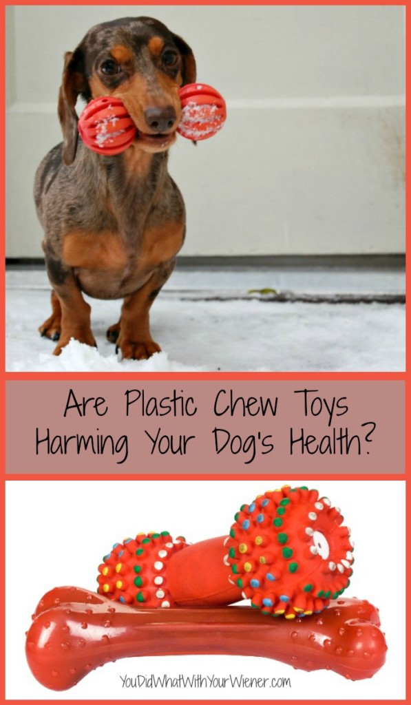 Plastic Chew Toys Could Be Harming YOur Dog