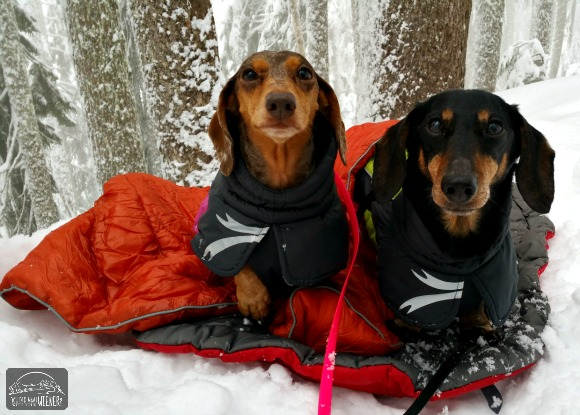 Chester and Gretel snuggled up for a break on our snowshoeing trip