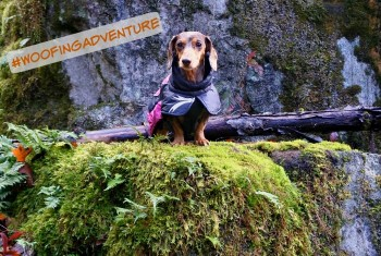 #WoofingAdventure Instagram Contest