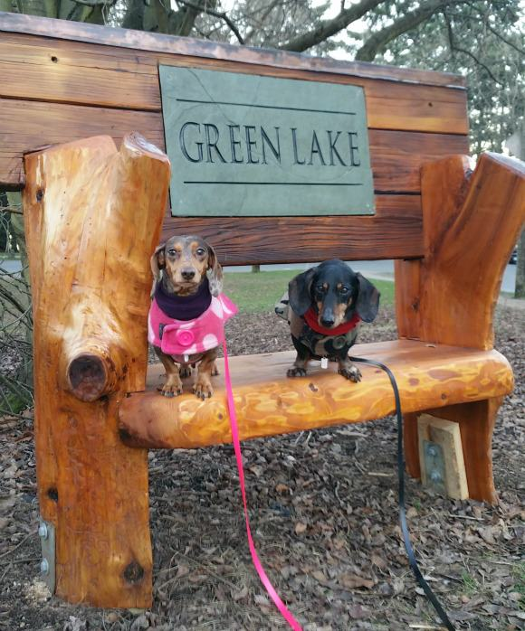 Chester and Gretel on the new Green Lake bench