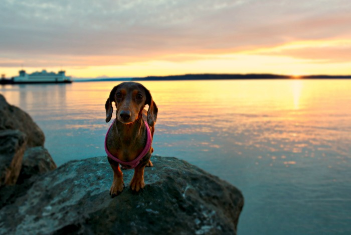 Visiting Port Townsend with Your Dog