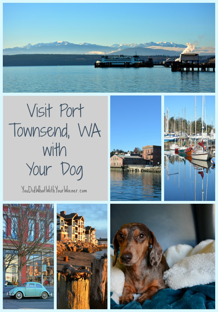 Visit Port Townsend with Your Dog #dogfriendly