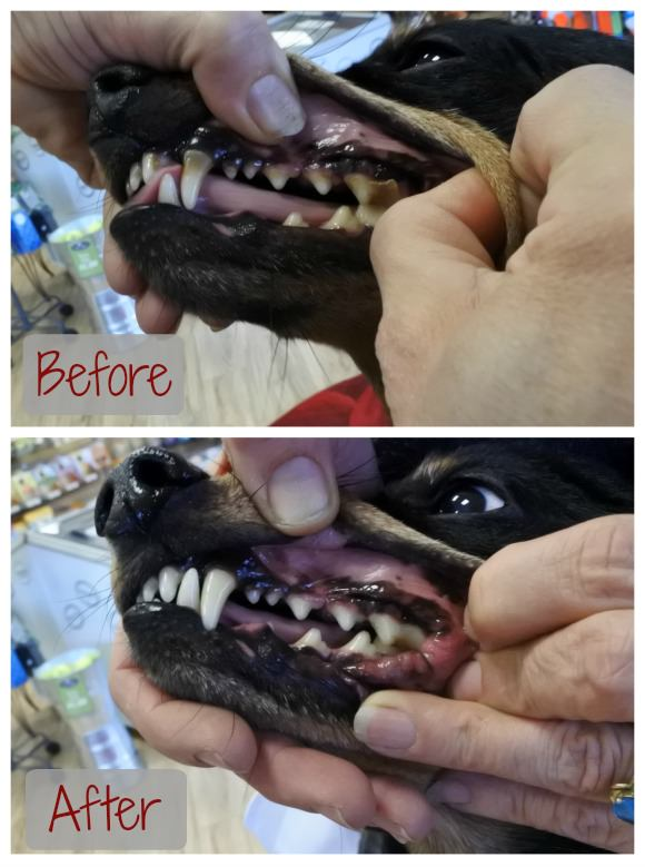 Anesthesia-Free Teeth Cleaning Before and After
