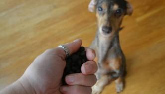 Gretel begging for some treats