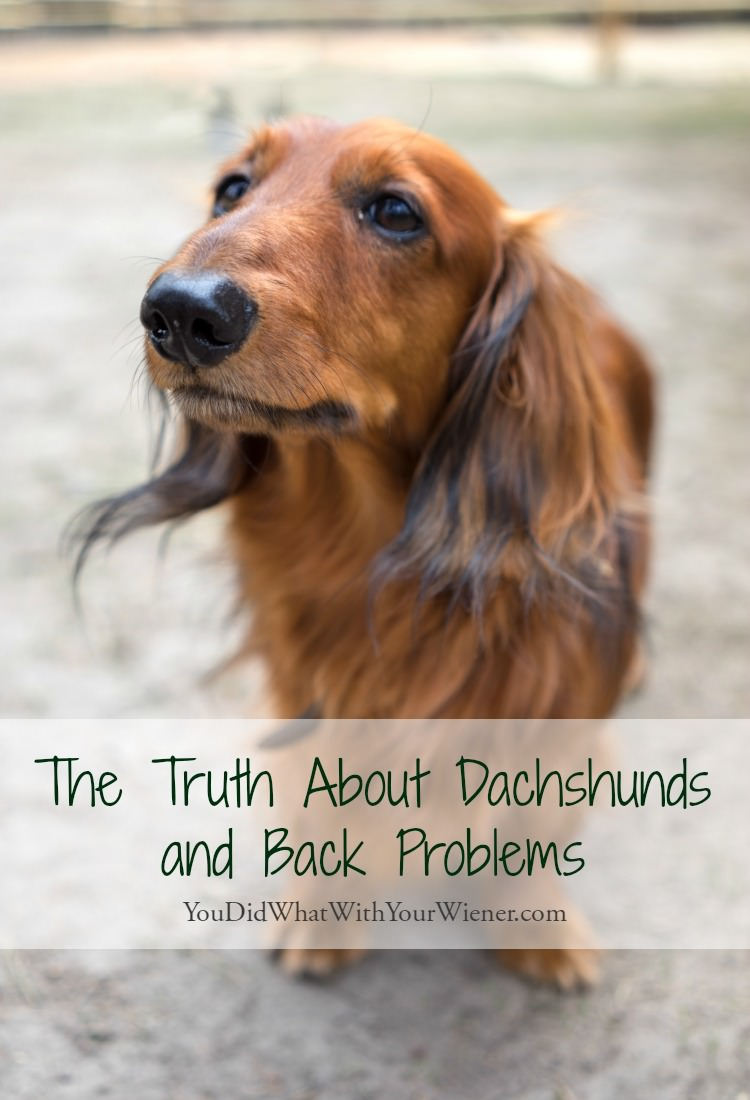 Facts About Dachshund Back Problems