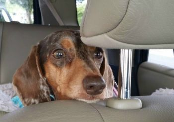 10 Must-Haves for a Safe and Happy Road Trip with Your Dog