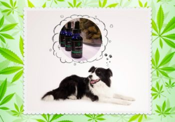 Hemp CBD Oil and Treats Are All the Rage; Can CBD Benefit Your Dog?