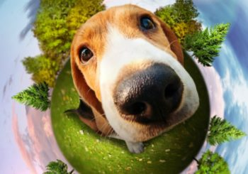 7 Ways to Go Green With Your Dog on Earth Day