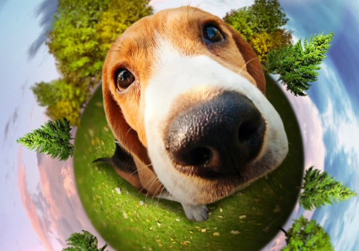 7 Ways Seattleites Can Go Green With Their Dog on Earth Day