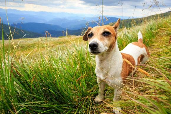 Treading lightly on trails and 6 other things to green your pet on earth day