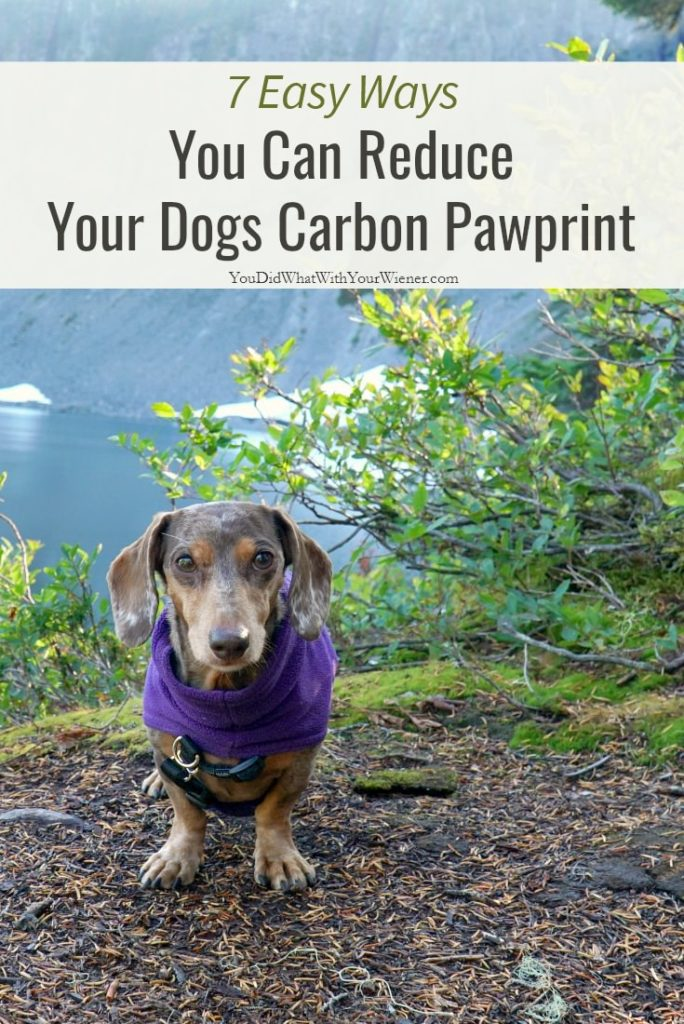 7 Ways to Reduce Your Pet's Impact on the Earth Pin Image