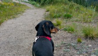 Top 10 Things You Hear When Hiking With a Small Dog