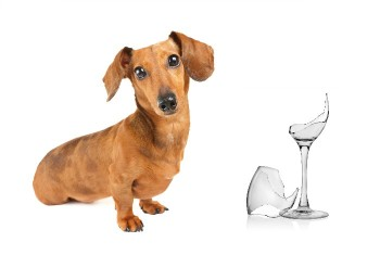 Do You Need to Treat Your IVDD Dog Like Breakable Glass?
