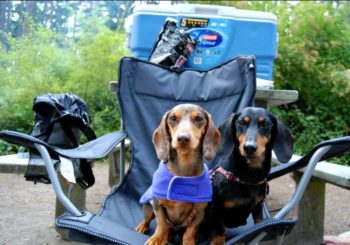 Car Camping with Your Dog 101
