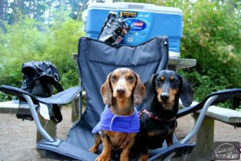 Chester and Gretel Car Camping