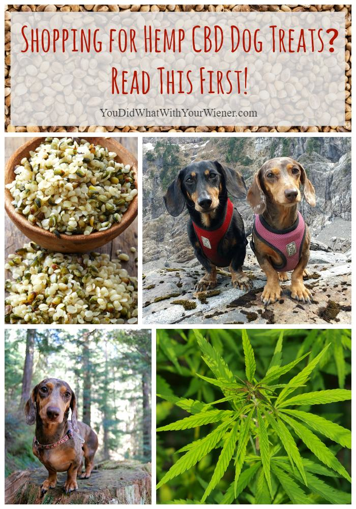 Hemp CBD Dog Treat Warning