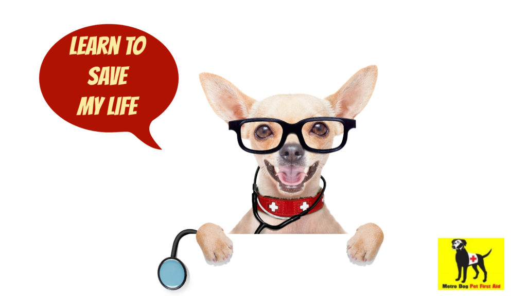 Learn to save a life with pet first aid certification from metrodogseattle.com
