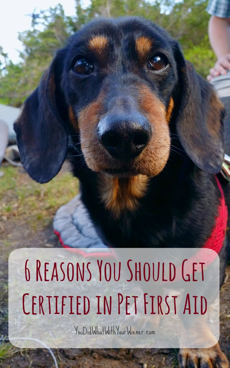 6 Reasons You Should Get Certified in Pet First Aid