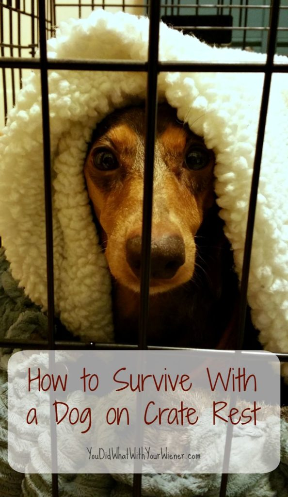 Advice for when your dog is on crate rest