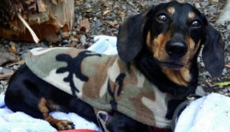 Car Camping With Your Dog 101 Pt. 2 – What to Bring