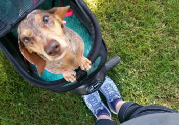 How a Gimpy Girl and Her Gimpy Dog Ran a 5k