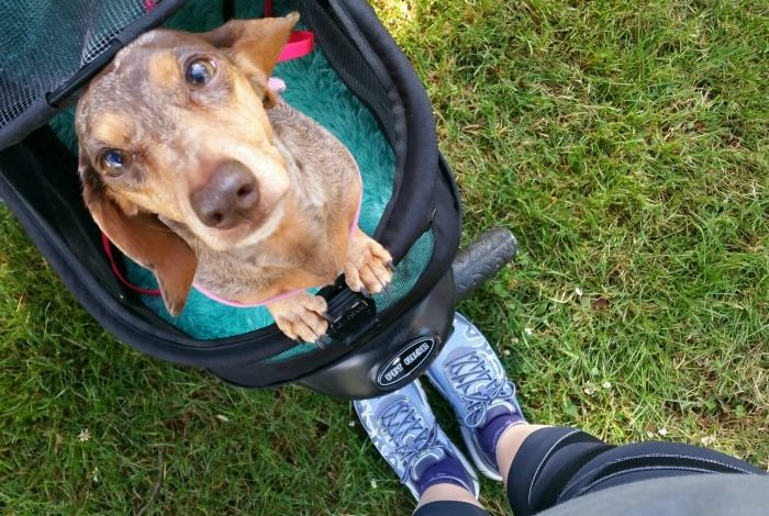 How a Gimpy Girl and Her Gimpy Dog Ran a 5k