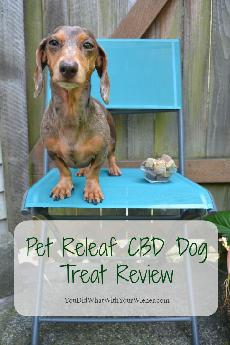 Find Out Why Pet Releaf Hemp CBD Dog Treats Are the Best #sponsored