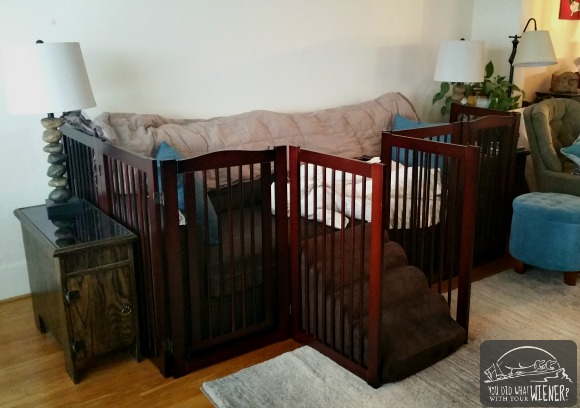 Couch with barricade and ramp for Dachshund back problems