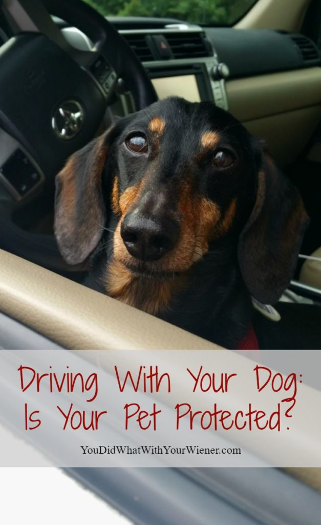 Taking Your Dog With You in the Car Can Be Dangerous. Is Your Pet Protected?