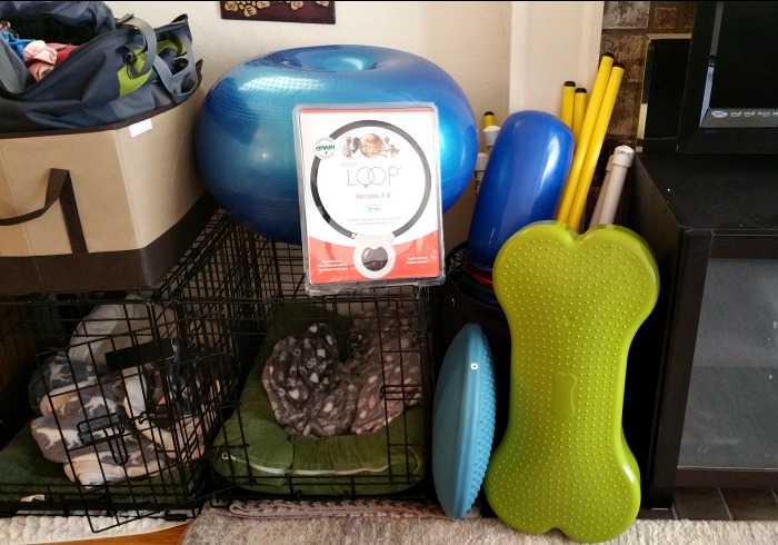 Equipment for my home dog gym
