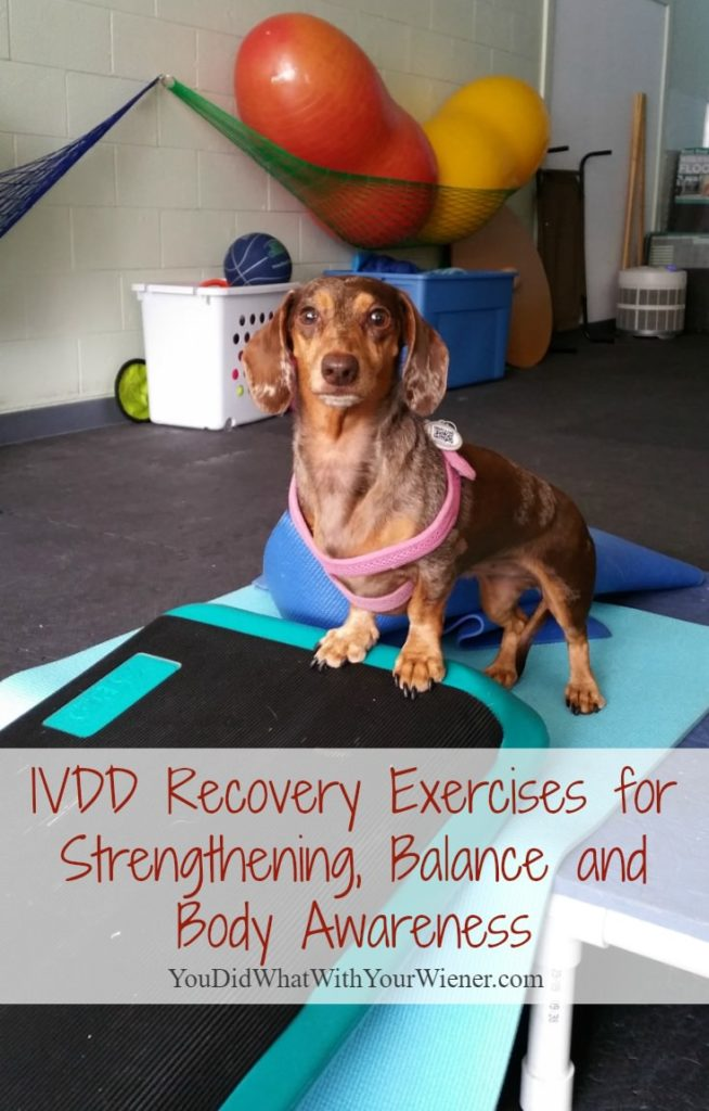 Recovery exercises to help dogs with back issues and Intervertebral Disk Disease