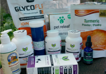 Supplements for Active Dogs, Senior Dogs, and Dogs Recovering From IVDD