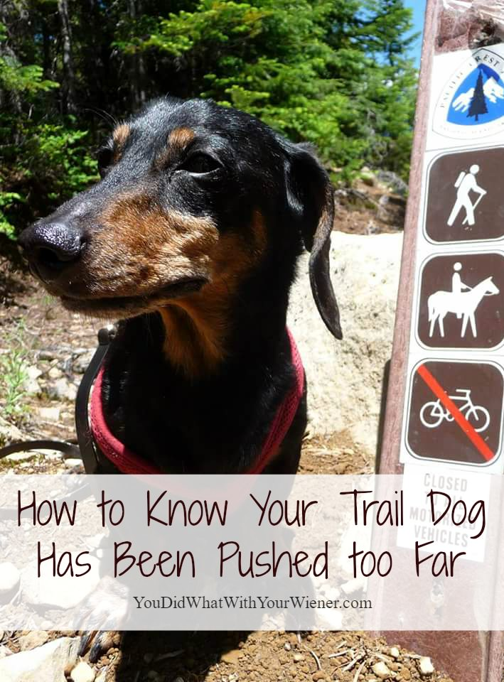 Know When Your Hiking Dog Has Had Enough