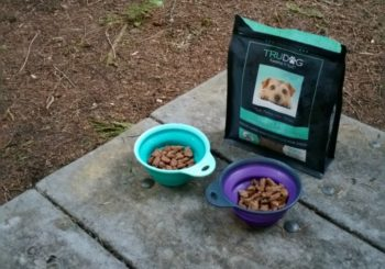 How Do You Feed Raw When You're Backpacking With Your Dog?