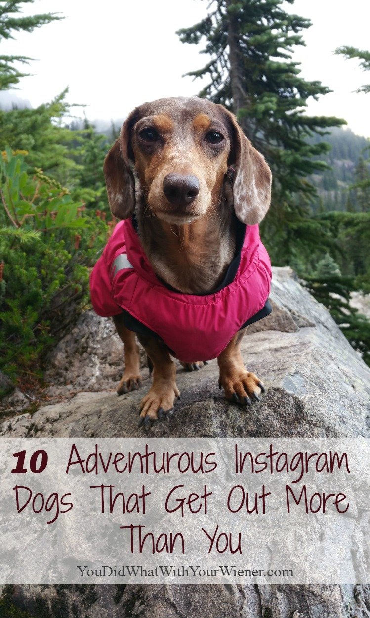 10 Instagram Dogs That Have Way Too Much Fun in the Outdoors