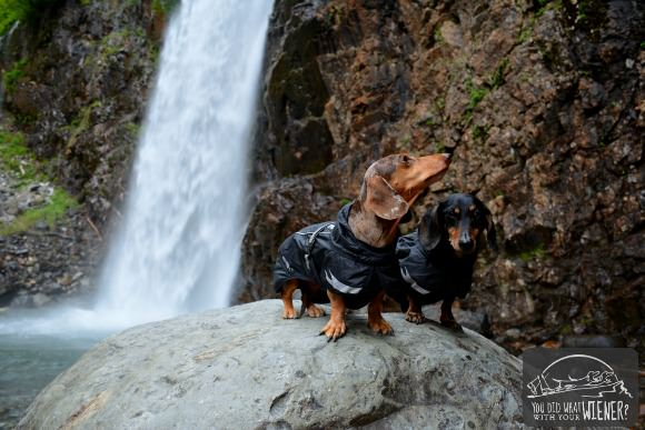 Dachshunds at Franklin Falls
