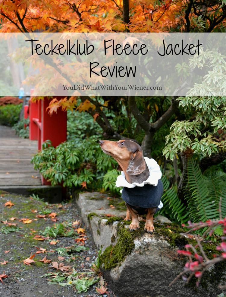 Dachshund modeling the Teckelklub Luxy jacket