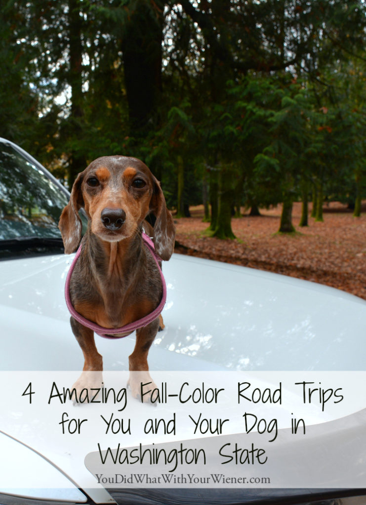 Fall grey and cold got you down? Take your pup on a road trip.