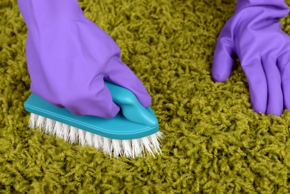 Scrubbing the carpet of pet stains