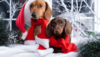 10 Unique Gifts for Dachshunds and Dachshund Lovers!