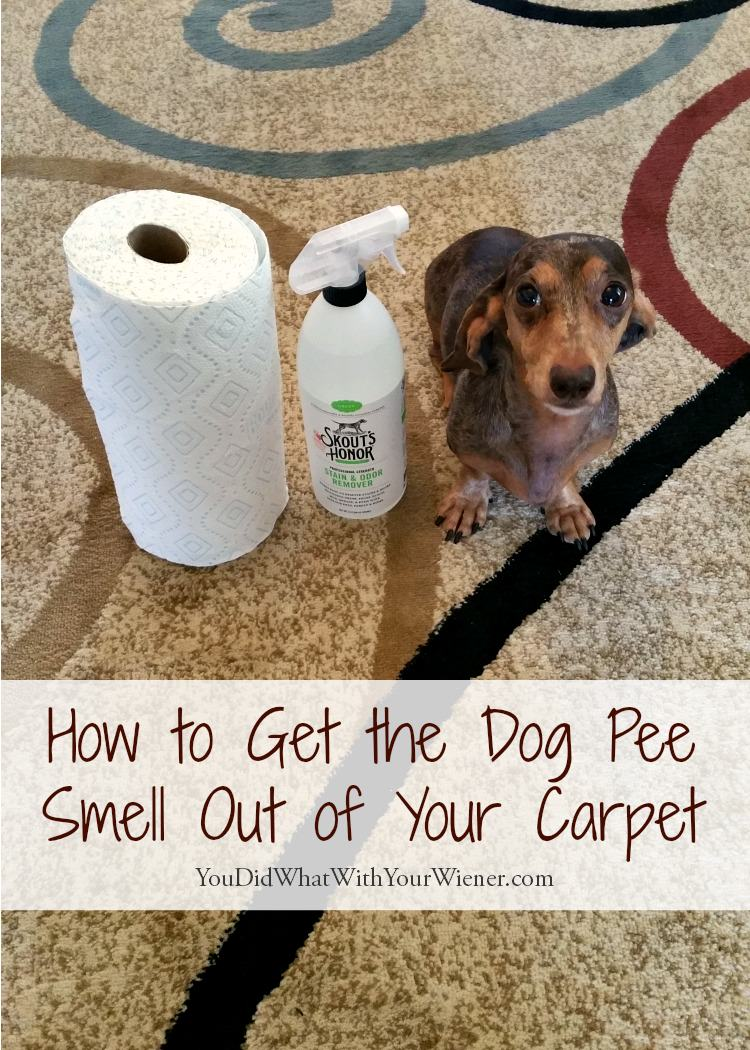 Urine smell off carpet