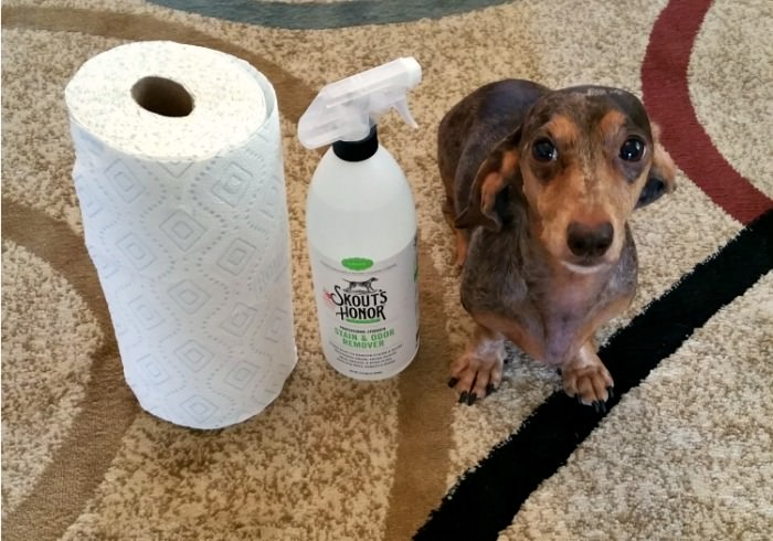 How To Get The Smell Of Dog Pee Out Of Your Carpet